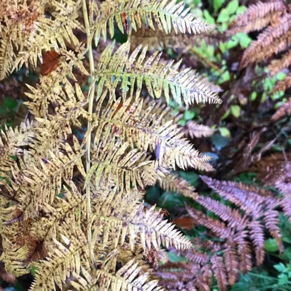 Autumn Escape North Wales